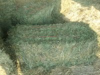 Top Quality Alfafa Hay for Animal Feeding Stuff Alfalfa