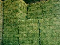 Premium Alfalfa Hay Bales and Alfalfa Pellets/ Grade A