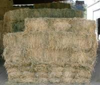 Buy Quality Alfafa Hay for Animal Feeding Stuff Alfalfa / Alfalfa Hay / Alfalfa Hay