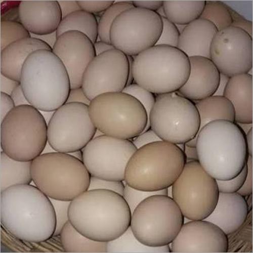 Kadaknath Brown Shell Egg