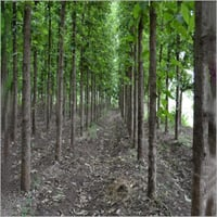 Forestry Plant