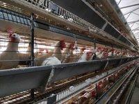 OMEGA COMMERCIAL LAYER BATTERY CAGE SYSTEM