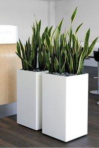 FRF Flower Pot