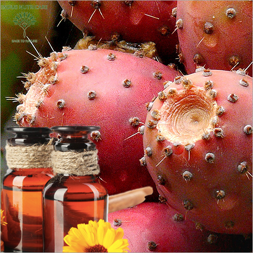 Cactus Seed Oil