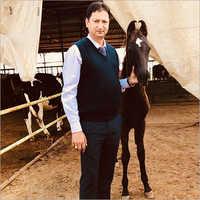 Indian Marwari Horse