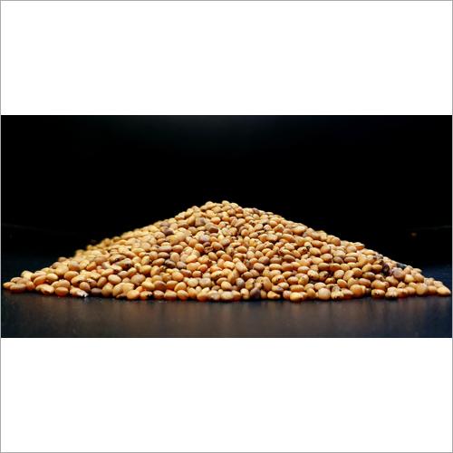 Guar Gum Seed