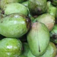 Dusheri Mango