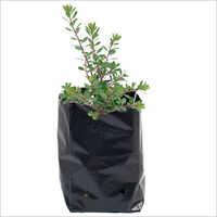Polythene Grow Bag