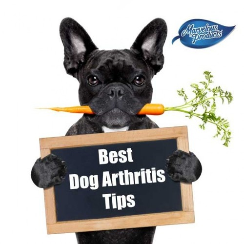 Third party for dogs supplements and medicines