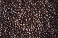 Coffea robusta Dry Extract