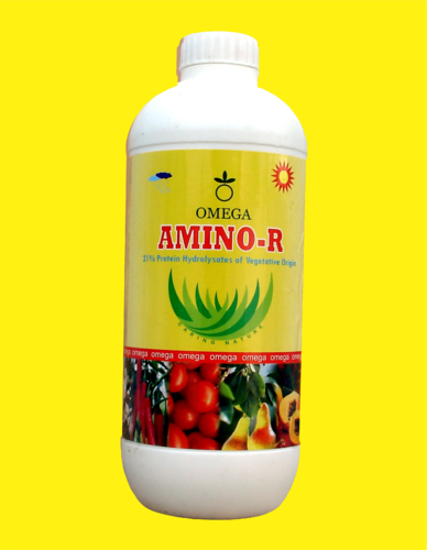 AMINO R