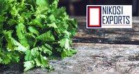 Organic Coriander Leaves