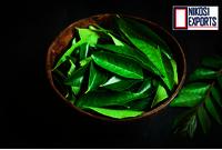 Organic Curry Leaf