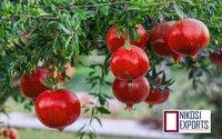 Export Quality Pomegranates