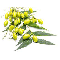 Organic Neem Seed