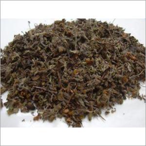 tulsi holy basil leaf dried