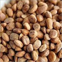 Buchanania Chironji