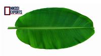 Fresh Green Indian Banana Leaf