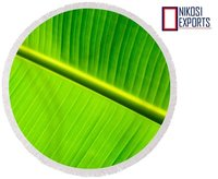 Green Banana Leaf For Plate