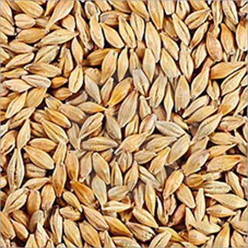 Wheat Barley
