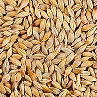 Wheat Barley