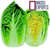 Green NAPA CABBAGE