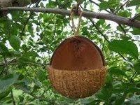 Coconut Shell V-Cut