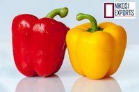 Red & Yellow Capsicum