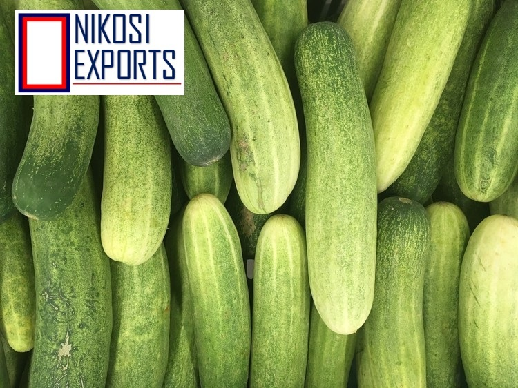 Seedless Cucumber
