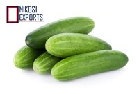 European Cucumber