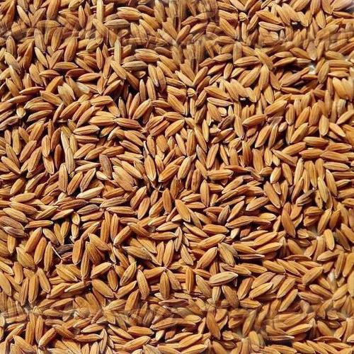 Brown Masoori Paddy Rice