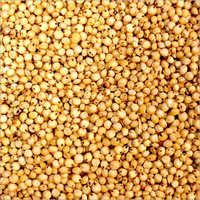 Sorghum Feed Quality