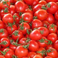 Desi Tomato