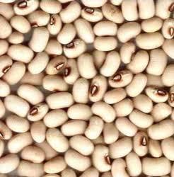 Black Eyed Bean