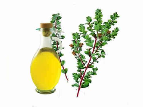 buchu leaf oil