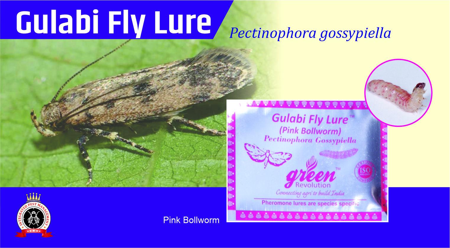 Pink Boll-Worm Pheromone Lure