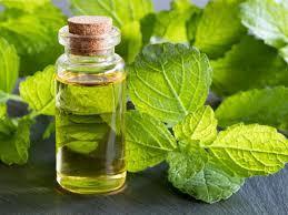 melissa oil