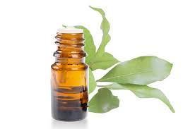 ravintsara oil