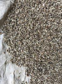 organic Moringa seeds with wings