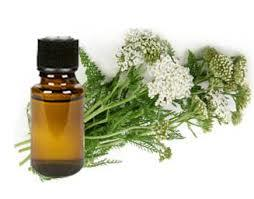 yarrow oil