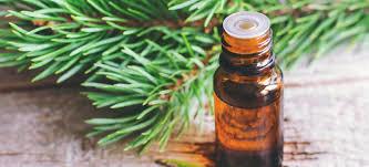 fir needle hydrosol