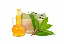 laurel leaf hydrosol