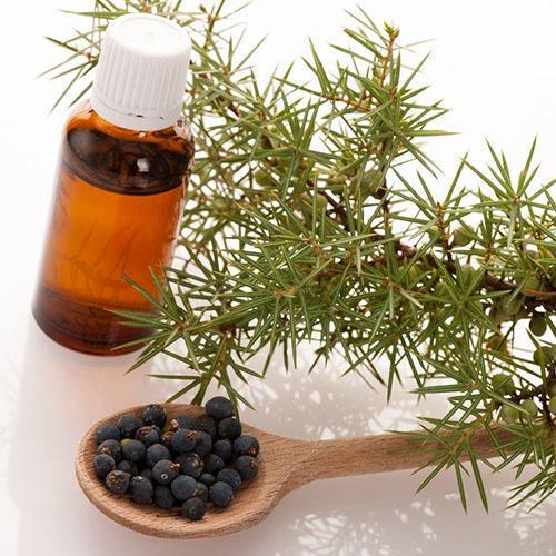 juniper berry hydrosol