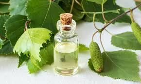 sweet birch hydrosol