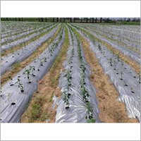 Agriculture LDPE Sheet