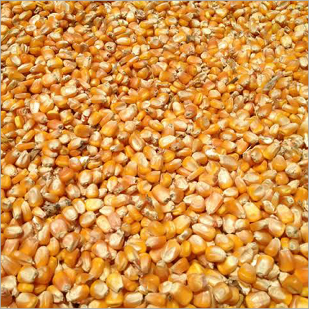 Yellow Corn For Animal Cattle Feed