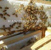 Pure Comb Honey