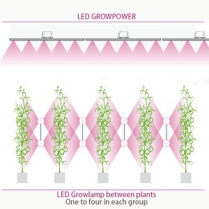 LED Growlamp between Plants