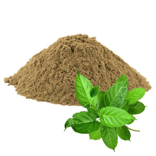 gymnema sylvestre herbal powder