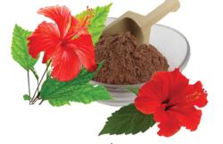 hibiscus rosa sinensis herbal powder